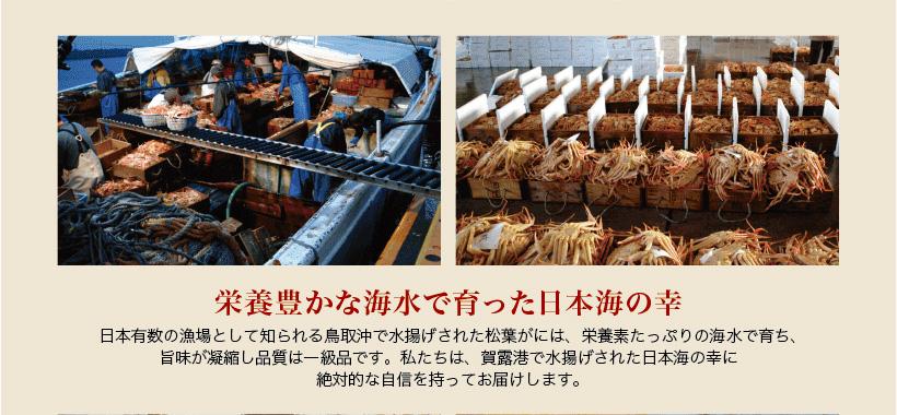 栄養豊かな鳥取沖の海水で育ち、賀露港で水揚げされた日本海の幸