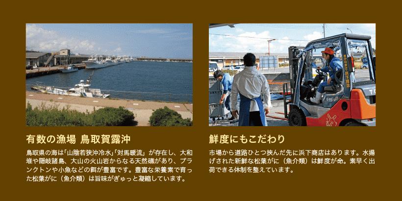 鳥取県賀露沖は天然礁があり豊富な餌で育った松葉がには旨味が濃縮しています。鮮度にもこだわっています。